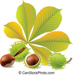 Autumn chestnuts. Chestnuts. Contains transparent objects....