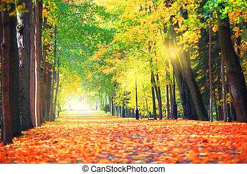 Autumn city nature