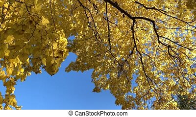 4K Sun shining through fall leaves - autumn city park or beautiful forest with sun shining and blue sky.