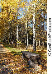 Autumn city park. - Wooden bench along path strewn with...