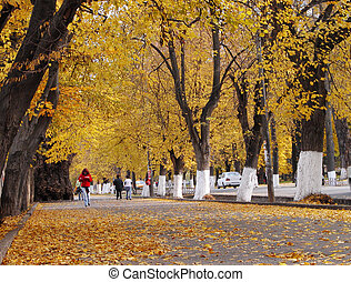 Autumn city street - Aspect from an autumn city in an...