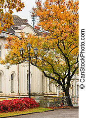 autumn cityscape after rain, with yellowed trees and street...
