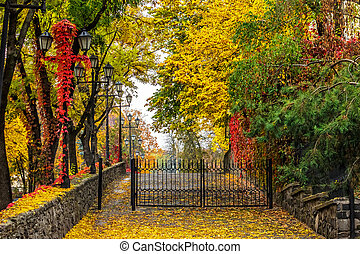 autumn cityscape with foliage and street lamps - urban...