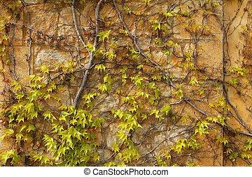 Autumn climbing plant wall texture background