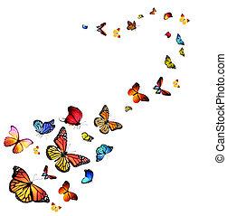 Autumn collection - butterflies