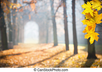 autumn colonade with a gateway and yellow blades, shallow ...
