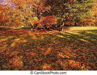 A colorful Autumn landscape.
