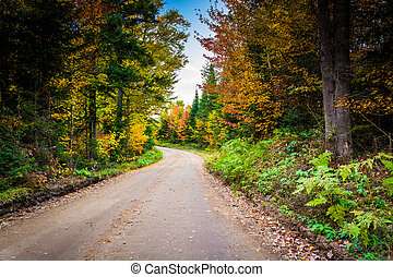Autumn color along a dirt road in White Mountain National Forest