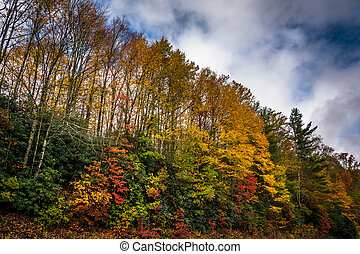 Autumn color along the Blue Ridge Parkway, near Blowing Rock, No