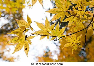 Autumn color change in Japan