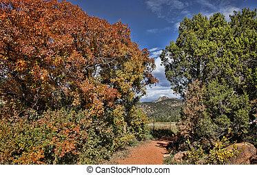Autumn Color Path in Colorado