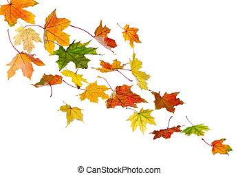 Autumn colored leaves falling