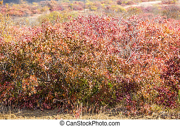 autumn colored leaves on the bushes