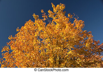 autumn colored tree leaves