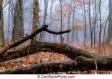 Autumn colorful foggy forest trees and leaves