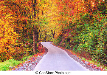 Autumn colorful forest winding road, nature landscape