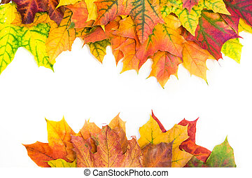 Autumn colorful leaves as border with white space for text. Top view. Fall frame.