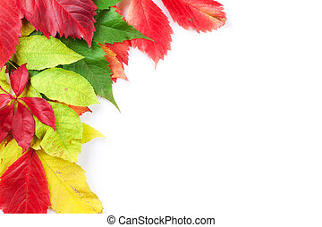 Autumn colorful leaves