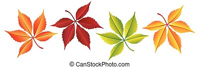 Autumn colorful leaves set, isolated on white background.