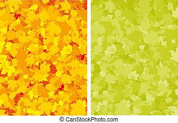 Autumn colorful maple leaves.