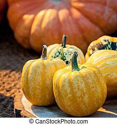 Autumn colorful pumpkins.