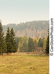Autumn colorful trees. Siberian forest.