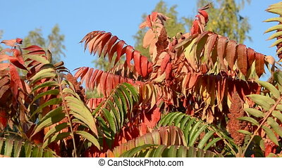 autumn colorfull plant leaves