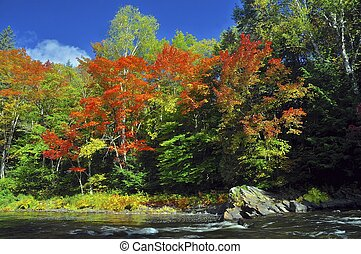 Autumn Colors at River's Edge