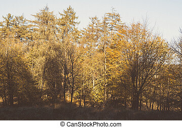 Autumn colors in a forest