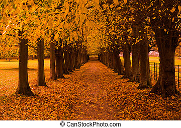autumn colors in the forest - Beautiful autumn colors in the...
