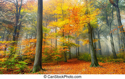 Autumn colors in the misty forest