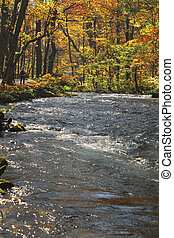 Autumn Colors of Oirase River