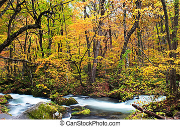 Autumn Colors of Oirase Stream at A