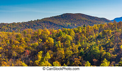 Autumn colors on a mountainside in Shenandoah National Park, Virginia.