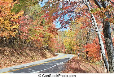 Autumn colors on a winding road
