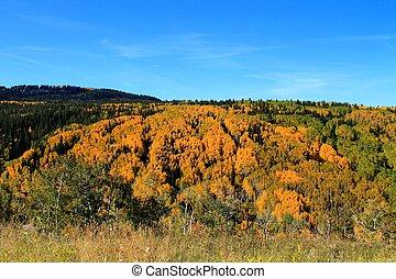 Autumn Colors on Grand Mesa