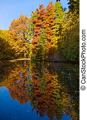 Autumn colors on the lake. Autumnal Park. Autumn Trees