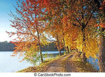 autumn colors under blue sky