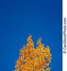Autumn colors under the clear blue sky