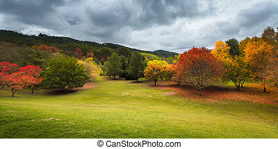 Autumn Colour - Beautiful autumn trees in the Adelaide Hills