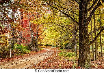 Autumn colour in Blue Mountains Australia