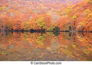 Autumn colours of pond