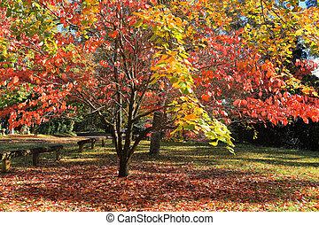 Autumn Colours - Beautiful sunlit autumn colours in the...