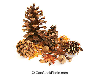 pinecones, pinenuts, walnuts, yellow leaves on white background