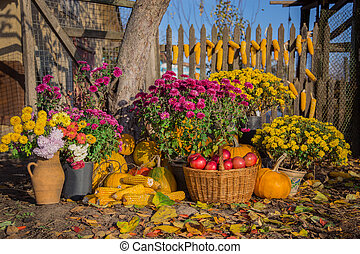 Autumn composition with chrysanthemum flowers, pumpkins, apples in a wicker basket, ceramic pots, outdoors.