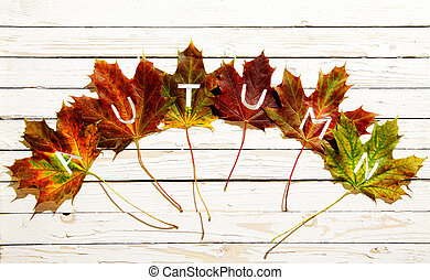 Autumn concept with colorful leaves