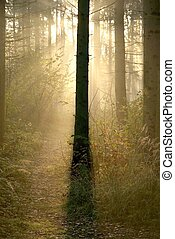 Autumn coniferous forest at dawn
