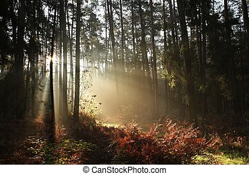 Autumn coniferous forest in the morning