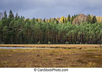 Autumn coniferous forest with lake Norovskoe, Russia