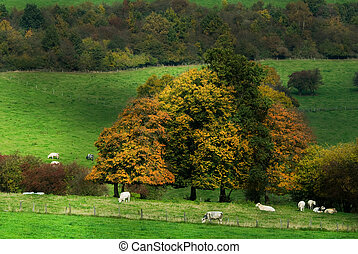 autumn country landscape - beautiful autumn country...